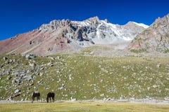 与两匹马的山风景 免版税库存照片