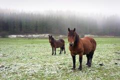 与两匹马看的冬天风景 免版税库存照片