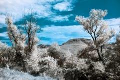 与两座树和山的红外风景 库存照片