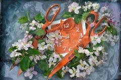 与两把大橙色剪刀和方形的橙色花的艺术静物画在新鲜的苹果树中在与油漆div的水中开花 免版税库存图片