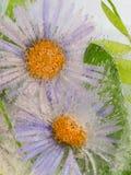 与两朵淡紫色花的抽象 免版税库存图片