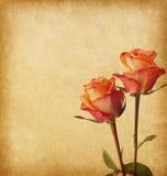 与两朵玫瑰的老纸 免版税图库摄影