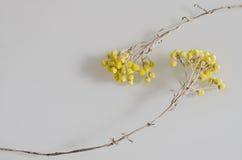 与两朵美丽的凋枯的黄色花的构成 免版税库存图片