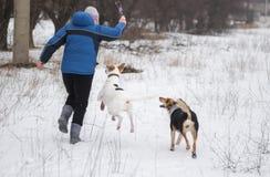 与两条混杂品种狗的妇女跳舞在冬天公园 免版税库存照片