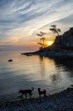 与两条狗的夏天日落在Shamanka附近Burhan岩石在奥尔洪岛的在贝加尔湖,俄罗斯 免版税库存照片