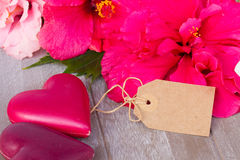 与两桃红色心脏的木槿花 免版税库存图片