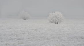 与两棵白色树的白色领域 免版税图库摄影