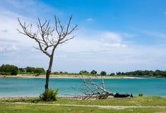 与两棵老死的树的河沿风景 库存照片