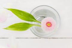 与两片竹叶子的桃红色雏菊在杯水 库存照片