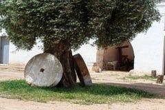 与两磨石的古老橄榄树 库存照片