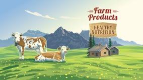 与两头母牛的山风景 免版税库存图片