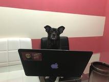 与个人计算机的狗 爱 逗人喜爱 家 免版税库存图片