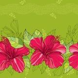与中国木槿的无缝的样式在红色和条纹开花在绿色背景 免版税图库摄影