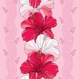 与中国木槿的无缝的样式开花在红色和在桃红色背景的白色与条纹 库存图片