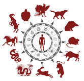 与中国黄道带动物和神秘的标志剪影的占星术图  免版税库存照片