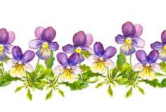 与中提琴的无缝的花卉边界带在白色背景开花 免版税库存照片