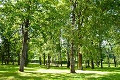 与丰富的绿色的明亮的木头 库存图片