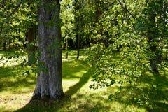 与丰富的绿色的明亮的木头 图库摄影