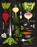 与为设计设置的叶茂盛上面的根菜类  免版税库存图片