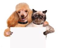 与举行在他的爪子白色横幅的猫的狗。 免版税库存照片