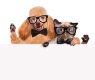 与举行在他的爪子白色横幅的猫的狗 免版税库存照片