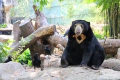 与乌鸦的熊 免版税库存图片