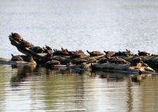 与乌龟的日志 免版税图库摄影