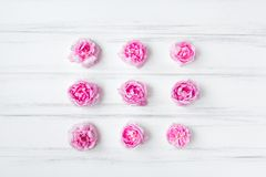 与九朵桃红色玫瑰的装饰样式在白色背景 库存图片