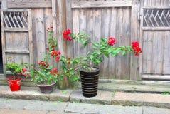 与九重葛在一个老木门面,中国的花盆 库存照片