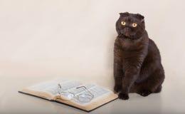 与书的美丽的猫 库存图片
