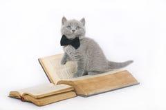 与书的英国小猫。 免版税库存图片