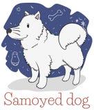 与乱画的蓬松白色萨莫耶特人狗准备好拥抱,传染媒介例证 皇族释放例证