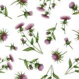 与乳蓟的水彩无缝的样式开花并且分支 皇族释放例证