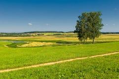 与二个结构树的农村横向 免版税库存图片