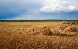 与二面对切的干草领域 免版税库存图片