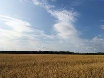 与云彩、绿草和黄色耳朵的明亮的蓝天在前景 库存图片