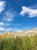 与云彩、绿草和黄色耳朵的明亮的蓝天在前景 免版税库存照片