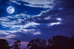 与云彩和月亮的天空在树上剪影  平静na 库存照片