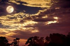 与云彩和月亮的天空在树上剪影  平静na 图库摄影