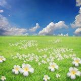 与云彩和花的蓝天在草 图库摄影