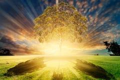 与云彩和草的日出天空 免版税库存照片
