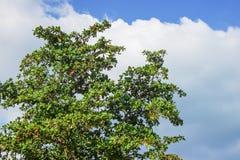 与云彩和绿色树的天空 免版税库存图片