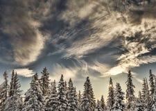 与云彩的云杉的结构树 免版税库存照片