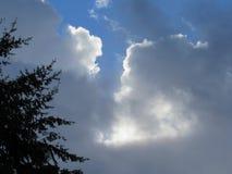 与云彩的杉树 免版税图库摄影