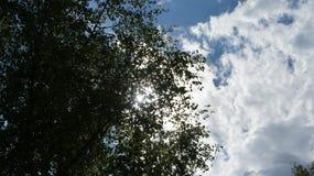 与云彩的树 免版税图库摄影