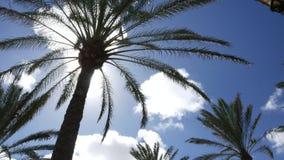 与云彩的棕榈树 股票录像