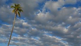 与云彩的椰子树 免版税库存照片