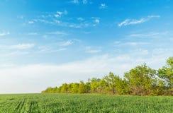 与云彩的蓝天在绿色领域 库存照片
