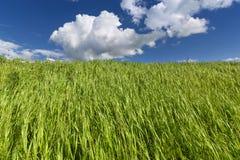 与云彩的蓝天在草甸 免版税库存照片