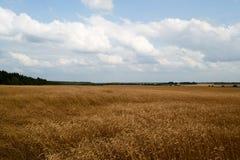 与云彩的麦子 图库摄影